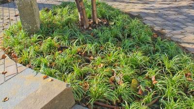henniker-nh-landscape-plant