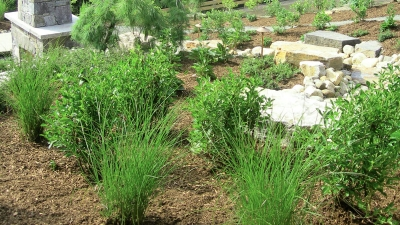 planting-designs-franconia