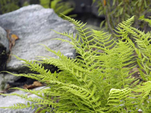 Native plantings for NH